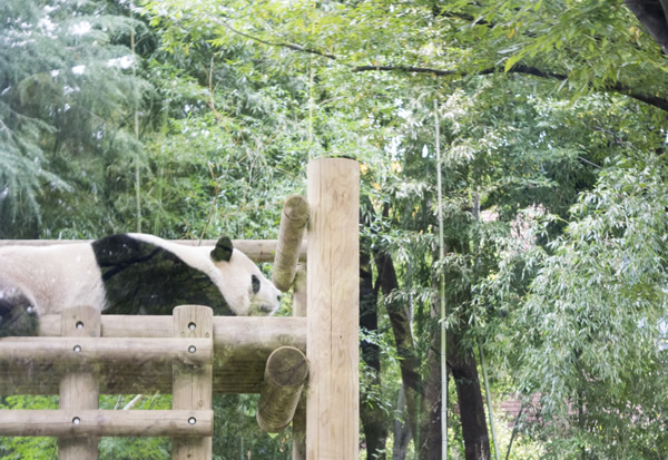 panda_blog