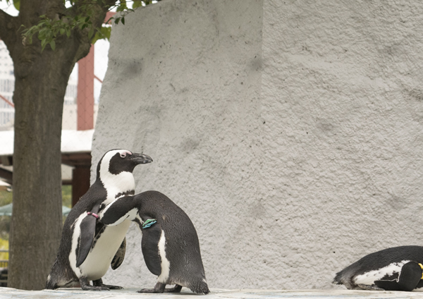 penguin_blog